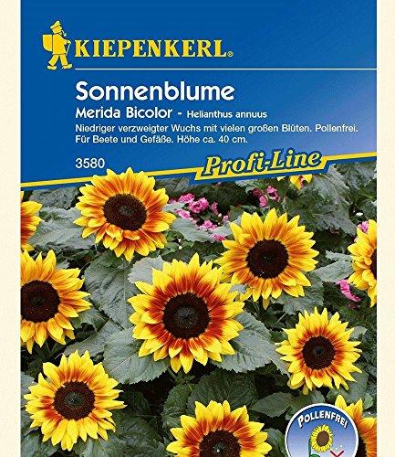sonnenblume-merida-bicolor1-portion