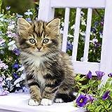 20 Servietten Kitty - Süße Katze auf Stuhl / Tiere / Tiermotiv 33x33cm