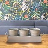 Vasetti di erbe aromatiche su un vassoio–ideali per coltivare erbe e fiori a casa sul davanzale (Hurst Pebble)