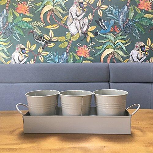 vasetti di erbe aromatiche su un vassoio-ideali per coltivare erbe e fiori a casa sul davanzale (hurst pebble)