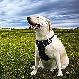 shewt Dog Brustgurt No-Pull Hundegeschirr Multi-Point-Einstellung Hundeweste Reflektierendes Zugseil Doppelte Dekompression für kleine mittelgroße Hunde
