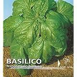 Premier Seeds Direct IPP58 - Semillas para verduras (albahaca)