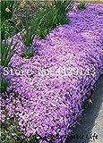 IDEA HIGH Semi-100 Pz Rare ROCK Cress Bonsai Pianta rampicante Timo Pianta Perenne copertura del suolo fiore per la casa decorazione del giardino: 22