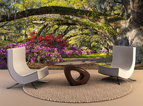 Foto Wandbild Charleston Sc Frühjahrsblüte Azalee Blumen Südcarolina Plantation Garden Wall Art Dekor Fototapete Poster Hochwertiger Druck
