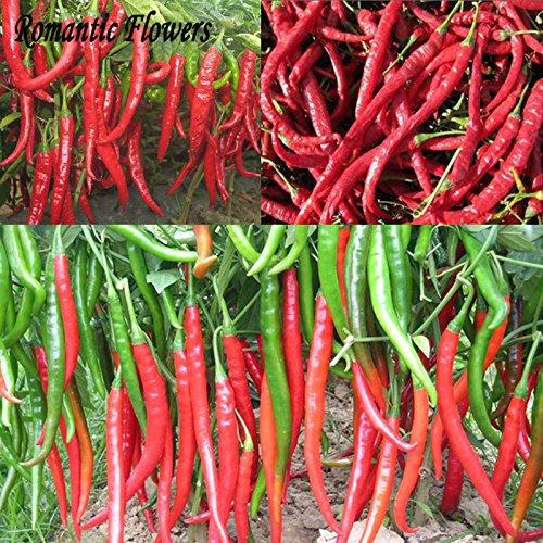 30 particules Épices / Sac géant Spicy Red Hot Chili Pepper Graines Plantes \
