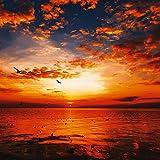 Artland Qualität I Alu Küchenrückwand Spritzschutz Küche 60 x 60 cm Landschaften Sonnenaufgang -untergang Foto Orange F1TC Sonnenuntergang am Strand mit wunderschönem Himmel