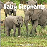 Baby Elephants 2018 Wall Calendar: Baby Elephants Photography, 8.5 x 8.5, Mini Calendar, Wall Calendar (New Years Gift Idea) (Animal Calendars)