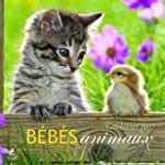 B�b�s animaux, calendrier 2017