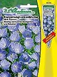 Karpatenglockenblume, blau, niedrig, wertvoll für Steingärten und Rabatten, mehrjährig ( mit Stecketikett) 'Campanula carpatica' Staude