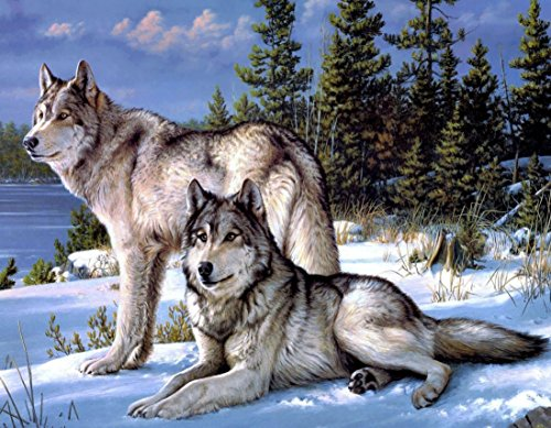Meshela 5D Diamant Full Malerei DIY Stickerei Painting Kreuzstich Diamond für Home Dekoration - Wolf auf der Snowfield (Seite Diamant-set 4)
