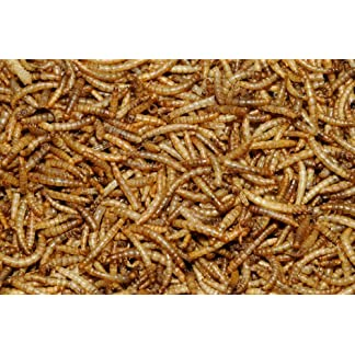 2.5 kg Dawn Chorus Dried Mealworms for Wild Birds 2.5 kg Dawn Chorus Dried Mealworms for Wild Birds 61SyMPgcEtL