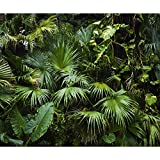 decomonkey | Fototapete Wald Palmen 350x256 cm XL | Tapete | Wandbild | Bild | Fototapeten | Tapeten | Wandtapete | Wanddeko | Wandtapeten | Blätter Pflanzen Natur grün