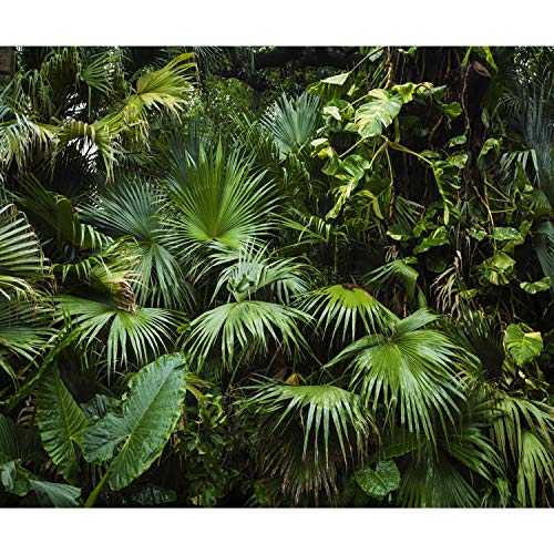 decomonkey Fototapete Wald Palmen 350x256 cm XL Tapete Wandbild Bild Fototapeten Tapeten Wandtapete Wandtapeten Blätter Pflanzen Natur grün - Dschungel-palme