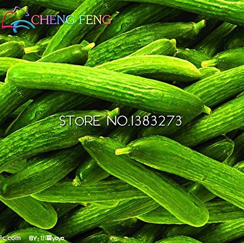 100pcs fruits graines de concombre, Cuke Graines, légumes verts pour la maison et le jardin plantation Les graines Livraison gratuite