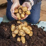 Starter Potato Growing Kit - 3 varieites, 3 growpots & fertiliser