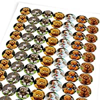 Chunky Hamster Teddy Bears, Reward Sticker Labels, Children, Parents, Teachers
