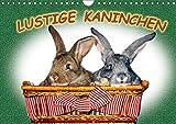 Lustige Kaninchen (Wandkalender 2019 DIN A4 quer): Kaninchen vor der Kamera. Wir Kaninchen lassen uns gerne fotografieren (Monatskalender, 14 Seiten ) (CALVENDO Tiere)
