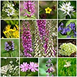 RP Seeds Wildflower Seeds - Woodland & Shade Mix - 2g