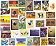 Bumper Pack of 30 Photographic & Artwork Animal Wildlife Greeting Cards