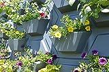 Palram 70228 Vertical Garten Beschichtung, Grau, 57,2 x 52,8 x 9,7 cm, 2 Stück