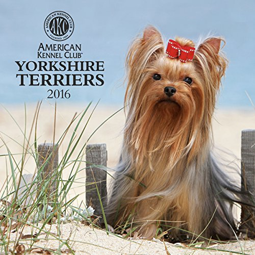 Cal 2016 Yorkshire Terriers