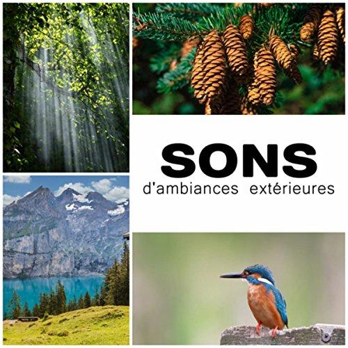 Eau Sous Le Vent (Sons d'ambiances extérieures (Sous-bois calme avec chants d'oiseaux, Fleuve et lac, Silence naturel avec vent léger, Bruit d'écoulement d'eau, Vagues))