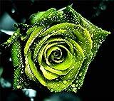 UPSTONE Garten - 100 Edelrosen Blumenmeer Samen mehrjährig winterhart Regenbogen Rosen Saatgut Bonsai Samen, geeignet für Blumenwiese, Balkon, Genschenk