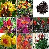 Portal Cool Orangen: 50 Stück Canna Samen Mix Farben Bonsai Blume Topf Samen Garten Decor He8Y