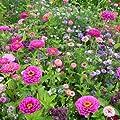 Profiline 4000159049451 Kiepenkerl Blumenmischung Bauerngarten von Profiline auf Du und dein Garten