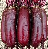 Semi Premier diretto ORG 204 sementi di barbabietola Cylindra organici (confezione da 400)