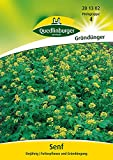 Gründünger - Gelbsenf von Quedlinburger Saatgut