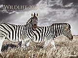 Wildlife Kalender 2019 - Tierkalender, Naturkalender, Posterkalender  -  64 x 48 cm