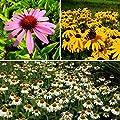3er Set: Staude Sonnenhut, rot, weiß und gelb blühend, 3 Pflanzen im 0,5 L. Topf von Grüner Garten Shop auf Du und dein Garten
