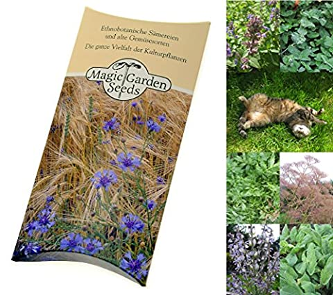 Seed kit: 'Happy cat herbs', 3 plant varieties your cat will love, presented in a beautiful gift box
