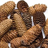 Baker Ross Long Pine Cones for Making Models Crafting and Decorations (Pack of 20)