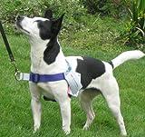 Walk Your Dog With Love Hundegeschirr Leine an Vorderseite des Geschirrs. Passend für Hunde mit einem Gewicht zwischen 5,4 - 10,4 kg. Brustumfang 38 - 53 cm, Violett.