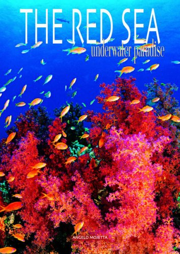 Red Sea and Complete Coral Reef Guide