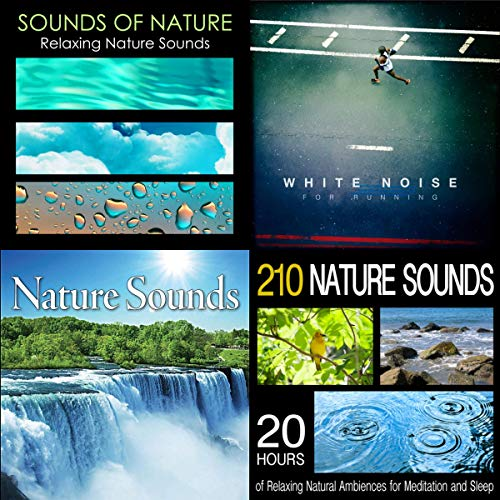 Rainforest Sounds by Tom Hambelton, Pro Sound Effects