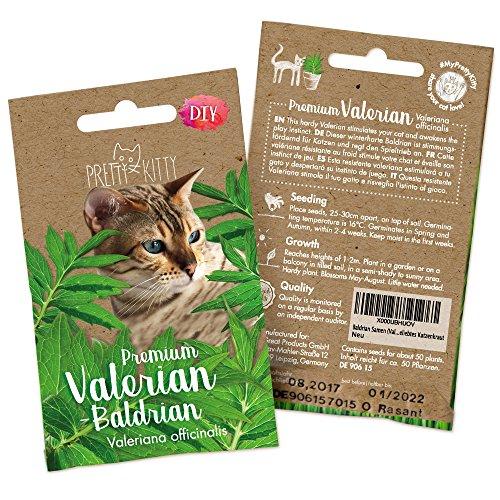 PRETTY KITTY Baldrian Samen (Valeriana officinalis) 250 Samen, fördert Spieltrieb von Katzen, echter Baldrian, winterhart, Katzenkraut