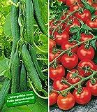 BALDUR-Garten Veredelte Salatgurke 'Phönix®'& Veredelte Strauch-Tomate 'Sparta' F1,1 Set