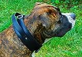 Tysons Breeches  Lederhalsband HALTI Festhalteriemen ! genäht Schwarz Breit Extra unterlegt Lederhalsband große/mittlere Hunde (L)