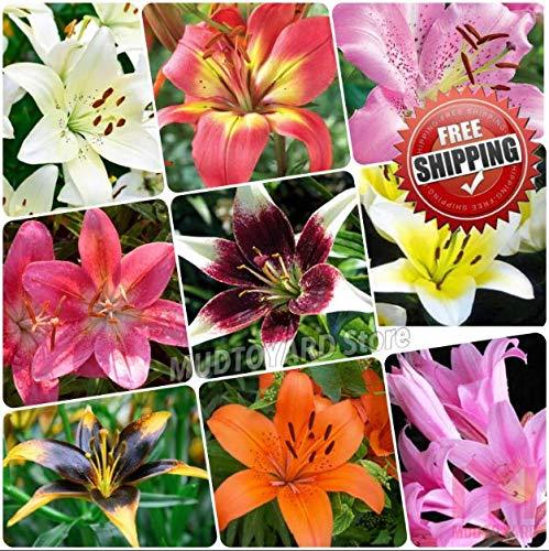 Shoopy Star 10 Banana Fruit de la passion, Passiflora mollisima, vigne graines comestibles Fruit Vendeur US