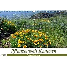 Pflanzenwelt Kanaren (Wandkalender 2018 DIN A3 quer): Traumhafte Bilder von einzigartigen Pflanzen der Kanaren. (Monatskalender, 14 Seiten ) (CALVENDO ... www.teneriffaurlaub.es by Rainer Hasanovic, ©