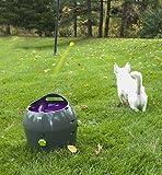Hunde Ballwurfmaschine