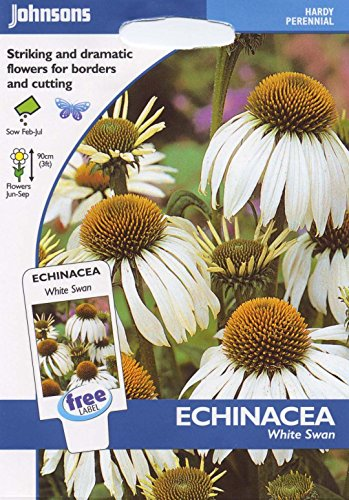 johnsons-seeds-pictorial-pack-fiore-echinacea-bianco-swan-50-semi