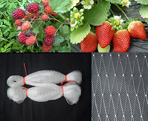 5m x 10m oder 10m x 10m Nylon Netting (2,5 cm Quadrat Mesh), Anti Vogelschutznetz, Vogelschutznetz, Gartennetz, unsichtbare Teichnetz, Geflügelnetz(Transluzent: 5m x 10m)