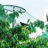Zerone Gartennetze, 4m x 10m grün Gartennetze Anti Vogelnetz für Pflanzenschutz, Netzen für Schützen Sämlinge, Gemüse, Pflanzen, Teiche, Schädlingsbekämpfung, etc.