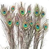 SWT 12PCS - Plumas de pavo real reales para decoración (25-30cm)
