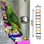 Bello Luna Rainbow Parrot Ladder Flexible Wooden Swing Toys for Bird 9
