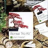 Plant Theatre Bonsai Trio Kit - 3 Distinctive Bonsai Trees to Grow - Great Gift
